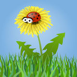 Ladybug on a dandelion. On blue background Stock Images