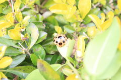 Ladybug. Day nature animal oneanimal  outdoor onpeople closeup Stock Photo