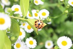 Ladybug. Day nature animal oneanimal  outdoor onpeople closeup Stock Image