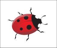 Ladybug del vector fotografía de archivo libre de regalías