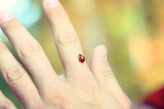 Ladybug a disposizione Fotografie Stock Libere da Diritti