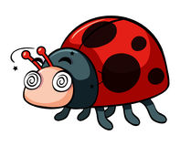 Ladybug with dizzy face Royalty Free Stock Images
