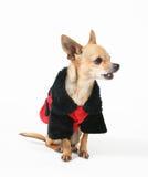 Ladybug dog Stock Photography