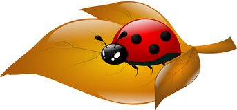Ladybug on dry leaf Stock Photography