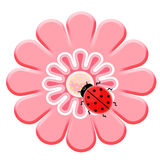 Ladybug en la flor rosada Imagen de archivo
