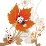 Ladybug en la hoja Imagen de archivo