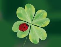 Ladybug en quatrefoil Imagen de archivo