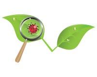 Ladybug en una hoja ilustración del vector