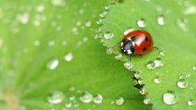 ladybug expedition Royalty Free Stock Photos