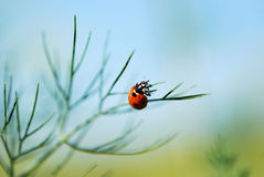 Ladybug in fannel Royalty Free Stock Photography