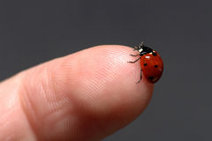 Ladybug on finger. A ladybug sitting on my fingertip Stock Photography