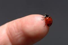 Ladybug on finger. A ladybug sitting on my fingertip stock photography