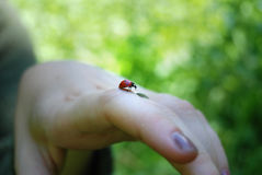 Ladybug on finger Royalty Free Stock Images