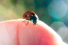 Ladybug on a finger. Closeup ladybug on a finger Royalty Free Stock Photography
