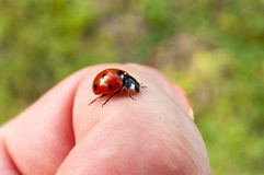 Ladybug on a finger Royalty Free Stock Images