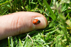 Ladybug on finger Stock Images