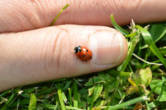 Ladybug on finger Royalty Free Stock Photo