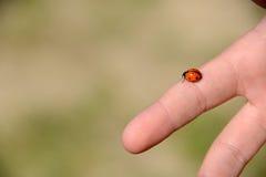 Ladybug upon a finger Stock Images