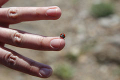 Ladybug in a finger Royalty Free Stock Images