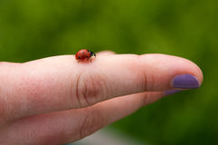 Ladybug on finger, with painted nails Royalty Free Stock Image