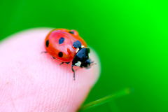 Ladybug on fingertip Stock Photo