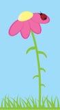 Ladybug and Flower Stock Photos