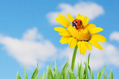 Ladybug in a flower stock photo