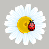 Ladybug on flower. Illustration background Royalty Free Stock Photos