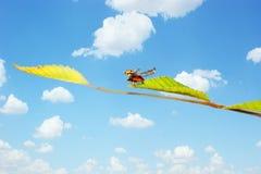 Ladybug fly Royalty Free Stock Image