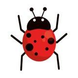 Ladybug fly antenna animal Stock Photos