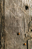 Ladybug and fly on wooden beam Royalty Free Stock Photo