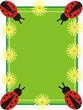 Ladybug frame Stock Photos