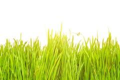 Ladybug on fresh green leaf isolated. Spring background Stock Images