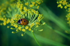 Ladybug in the garden Stock Images