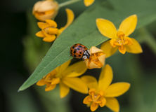 Ladybug in garden Stock Images