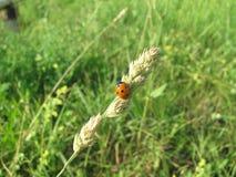 Ladybug on glass Royalty Free Stock Photos