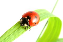 Ladybug go to you Stock Image