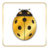 Ladybug Gold Insect Small Icon Royalty Free Stock Photo