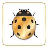 Ladybug gold insect small icon. Golden metal lady bug animal sign, isolated on white background. 3d volume bright design. Cute shiny jewelry ladybird. Lady Stock Image