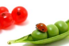 Ladybug gourmet Royalty Free Stock Images