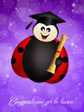 Ladybug graduate Royalty Free Stock Photo
