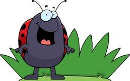 Ladybug Grass Stock Image