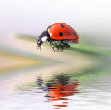 Ladybug in grass Royalty Free Stock Photos