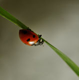 Ladybug on the grass. Stock Photo