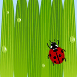 Ladybug on grass Stock Photos