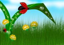 Ladybug in grass background Stock Photo