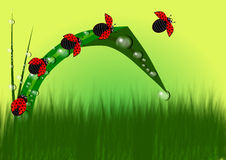 Ladybug in grass background Royalty Free Stock Photo