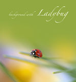 Ladybug on green Royalty Free Stock Photography