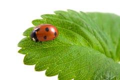 Ladybug on the green Stock Photo