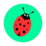 Ladybug on a green background Royalty Free Stock Image
